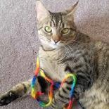 Adopt Me! Epson the cat