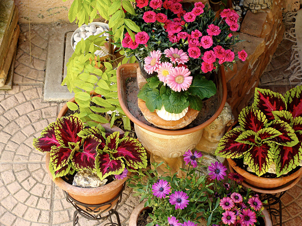 coleus and other potted plants