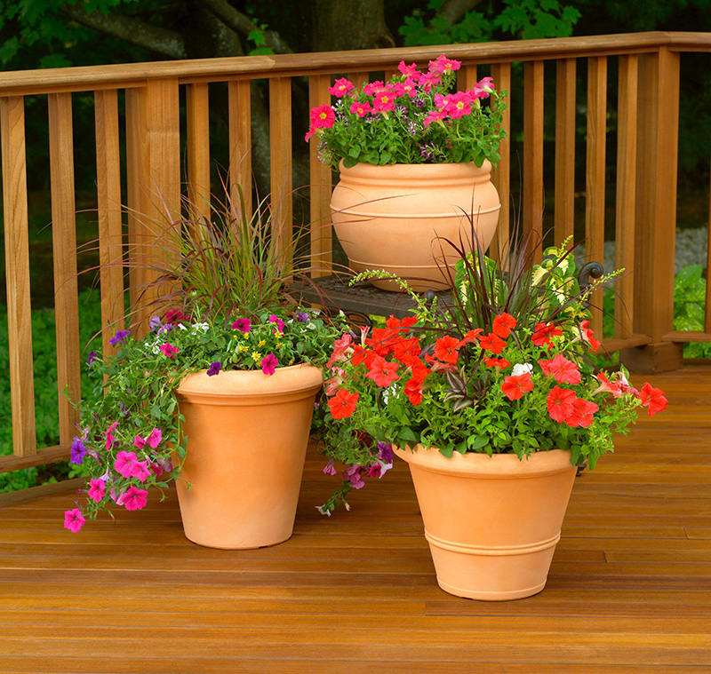 flowers in containers on a deck