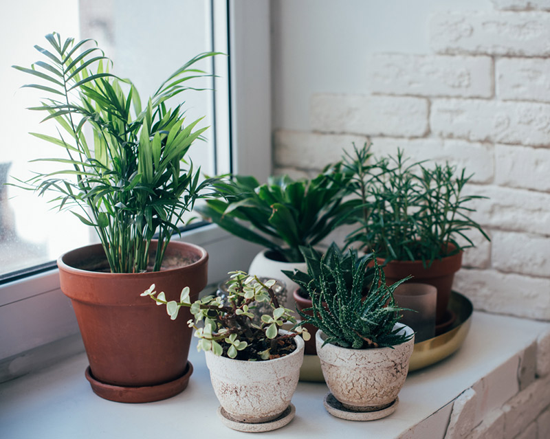 decor trends - house plants